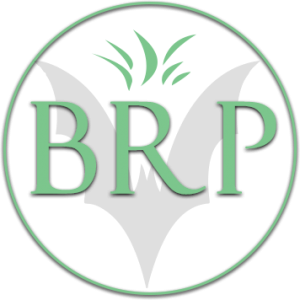 Bat removal Pro Logo