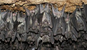 A life living upside down that is right side up for bats.